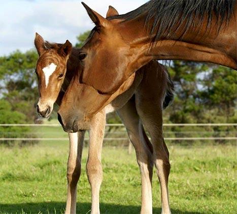 Mare foaling
