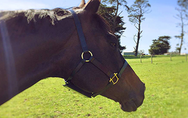 FOAL APP PROOF OF CONCEPT TESTING COMPLETE